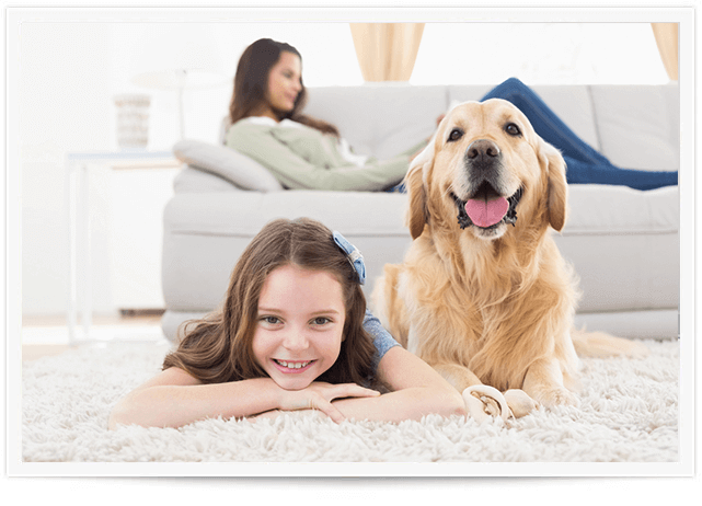 Pet Urine Removal Service in Marin County