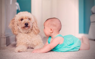 Picking the Right Carpet for Children and/or Pets