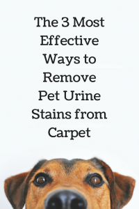 carpet stain, carpet cleaning in novato ca, dog urine removal in novato ca, pet urine stain novato