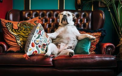 How Often To Clean Your Couch & Upholstery